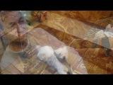 «2012+Рождество!!!» под музыку Фабрика звезд 3 - С новым годом, папа, с новым годом, мама!!! . Picrolla